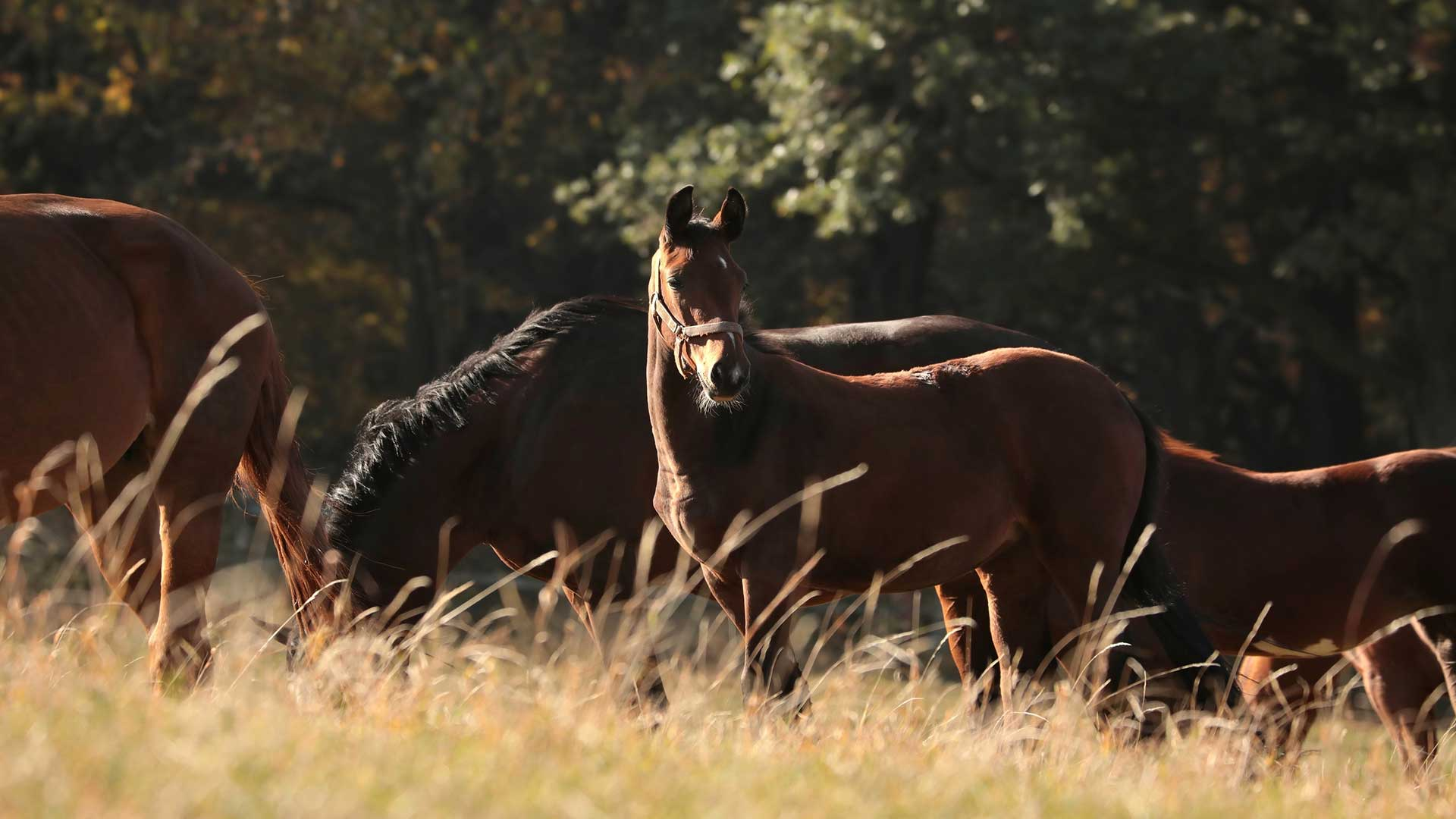 Equine Management Courses